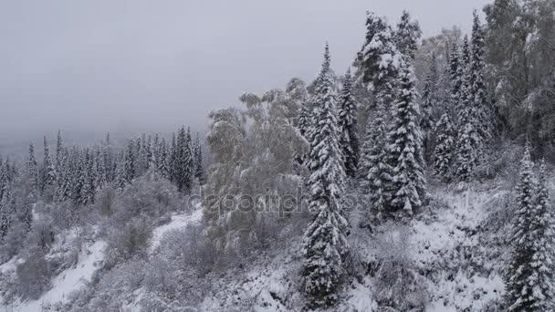 Letecký pohled. Let nad zasněžených lesů. Příroda v zimě. Panorama krajiny. Altaj, Sibiř