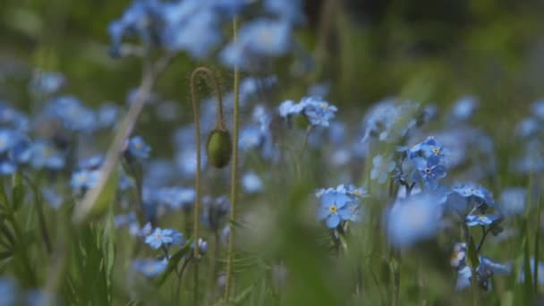 Blue flowers in the summer in the forest. Wonderful nature. 4k