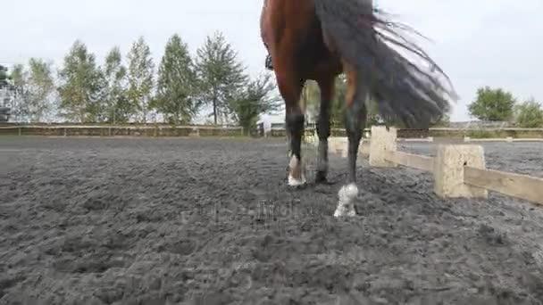 Fuß des Pferdes auf dem Sand gehen. Nahaufnahme von Beinen, die auf dem nassen matschigen Boden in der Manege auf dem Bauernhof gehen. Nachfolger für Hengst. Nahaufnahme