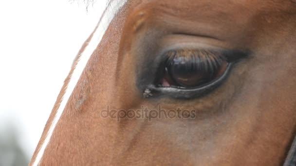 Nahaufnahme des Auges eines schönen braunen Pferdes. Pferdeaugen blinzeln. Zeitlupe
