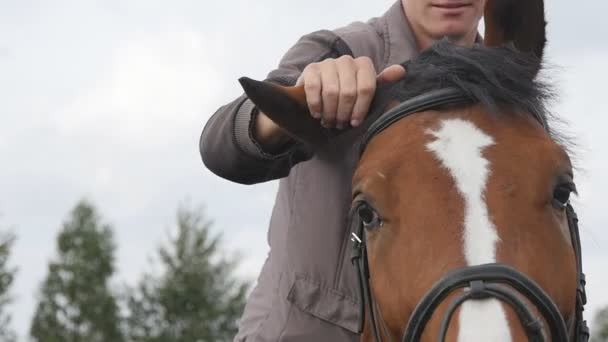 Male jockey caresses and petting brown stallion at nature. Young man stroking mane of horse outdoor. Guy riding horseback. Care and love for the animals. Close up Slow motion