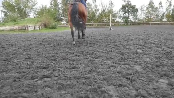 Následující koně tryskem a skákání přes překážky. Profesionální žokej mužské jízdy na koních. Hřebec běží na písku na manéž. Pohled zezadu zpět Zpomalený pohyb