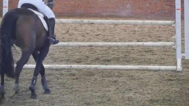 Kůň běží a skáče přes překážky na sportovní soutěže. Detailní záběr nohou koně tryskem. Profesionální žokej jezdí na koni. Zpomalený pohyb