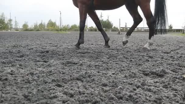 dem Fuß des Pferdes folgend, das auf dem Sand läuft. Nahaufnahme von Hengstbeinen, die auf dem nassen matschigen Boden galoppieren. Zeitlupe
