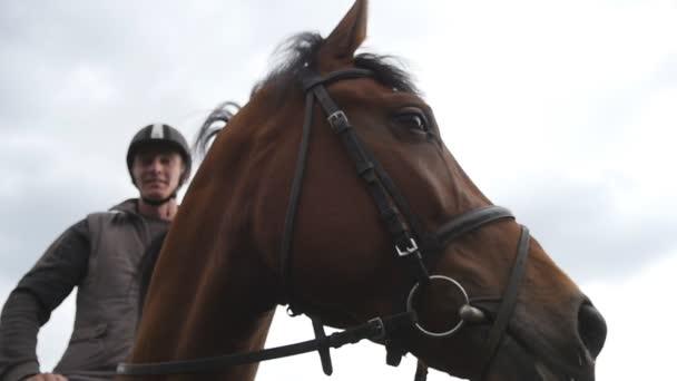 Muso di cavalli o testa con briglia si chiuda. Volto di stallion del brown e occhio in primo piano con dettaglio di criniera. Seduta a cavallo della puleggia tenditrice. Slow motion