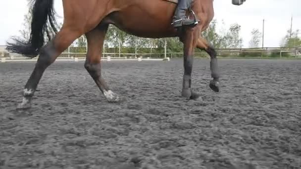 Following to foot of horse running on the sand. Close up of legs of stallion galloping on the wet muddy ground. Slow motion