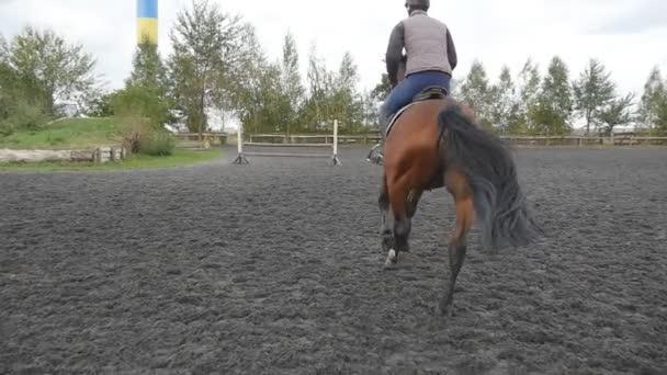Následující koně tryskem a skákání přes překážky. Profesionální žokej mužské jízdy na koních. Hřebec běží na písku na manéž. Zpomalený pohyb