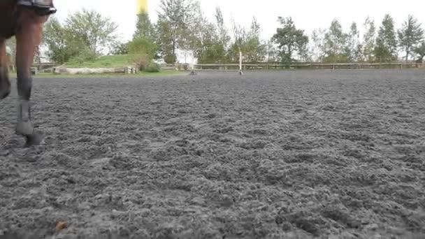 dem Fuß des Pferdes folgend, das auf dem Sand läuft. Nahaufnahme von Hengstbeinen, die auf dem nassen matschigen Boden galoppieren. Rückseite Zeitlupe
