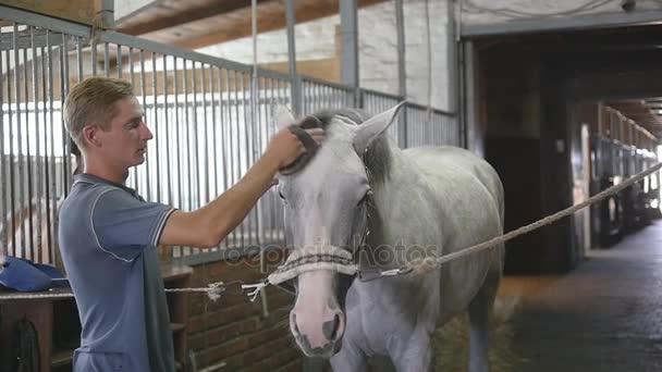 Junge säubert Pferdekörper in einem Stall. Mann reinigt ein weißes Pferd mit Bürste von Staub und Schmutz. Fürsorge für Tiere. Reiterverein. Zeitlupe, Zeitlupe, Nahaufnahme, Nahaufnahme