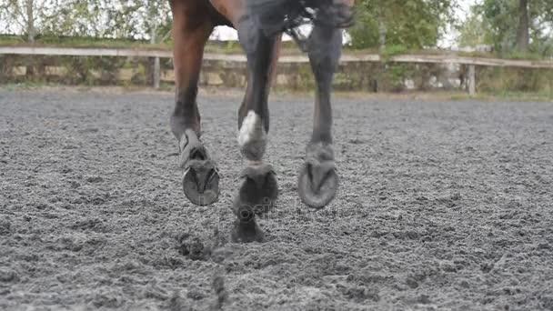 Pferdefuß, der auf dem Sand läuft. Nahaufnahme von Hengstbeinen, die auf dem nassen matschigen Boden galoppieren. Zeitlupe