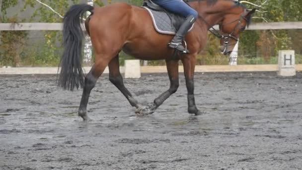 Fuß des Pferdes auf dem Sand gehen. Nahaufnahme von Beinen, die auf dem nassen matschigen Boden in der Manege auf dem Bauernhof gehen. Nachfolger für Hengst. Nahaufnahme Zeitlupe Seitenansicht