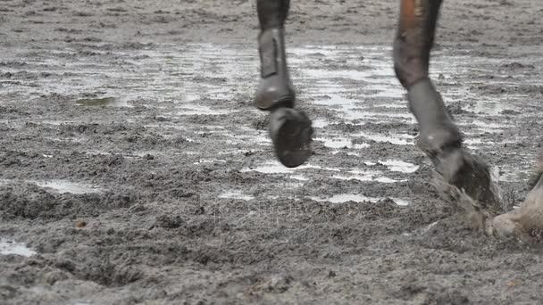 Pferdefüße, die auf Matsch laufen. Nahaufnahme der Beine des Hengstes beim Joggen auf dem nassen matschigen Boden. Nahaufnahme galoppierender Pfoten. Zeitlupe
