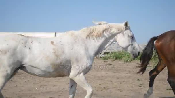 Skupina koní pasoucí se na louce. Koně se tryskem a procházky v poli. Detail