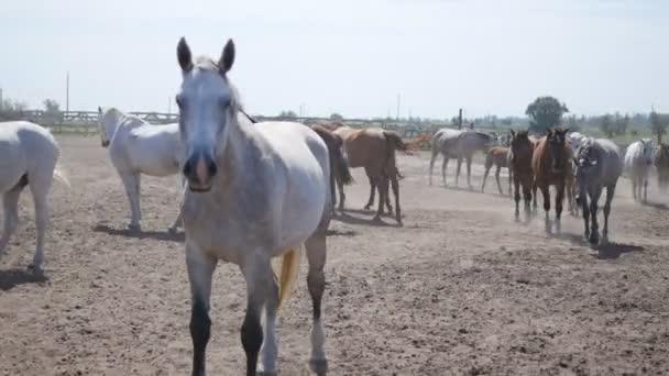 Stádo koní v paddocku. Skupina koní ve výběhu
