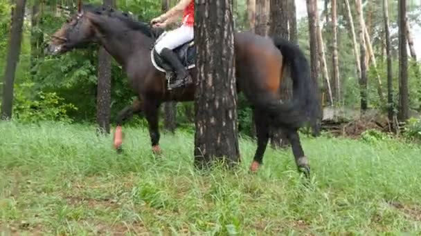 Pferd spaziert mit Jockeyspielerin im grünen Gras im Wald