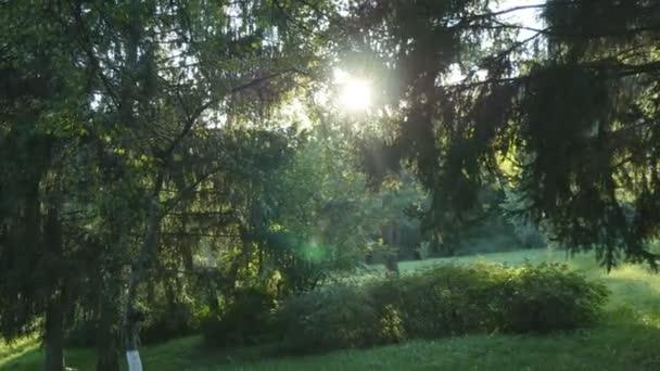 Sledování snímku v husté listnaté lesy. Slunce naléval přes strom. Les s paprsků zářící. Sluneční paprsky, světlo svítí skrze stromy a větve listnatých lesů.