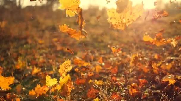 Őszi levelek hullanak lassított felvételen, és a nap ragyog az őszi leveleken keresztül. Gyönyörű táj háttér