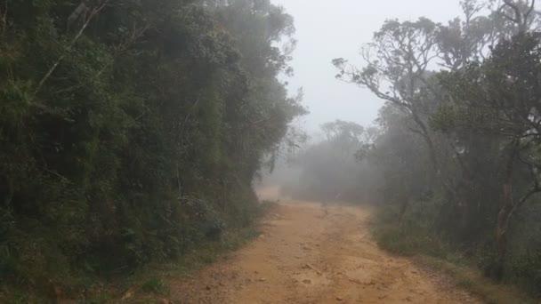 Pohybující se podél horské stezce mezi tropický prales. Hlediska projít cestu deštným pralesem. První osoba pohled prochází silniční džungle v mlhavém deštivém počasí. POV