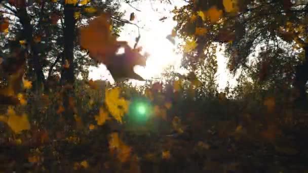 Sárga juharfalevelek hullanak az őszi parkban, és süt rajta a nap. Színes őszi szezon. Gyönyörű táj háttér. Lassú mozgás Bezárás