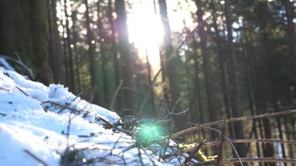 Nízký úhel pohled rozmazané slunce svítí skrz borovic v horském lese na ranní. Teplé sluneční paprsky osvětlující rostliny v zimě. Krásná příroda krajina na pozadí