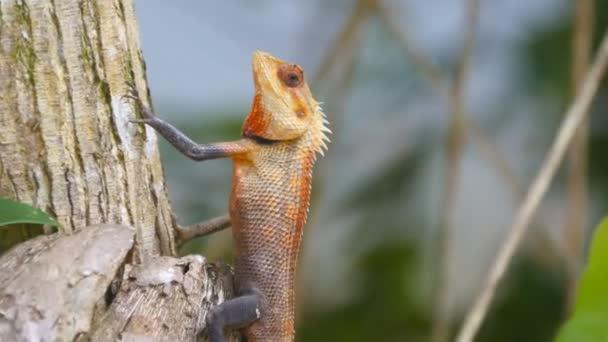 Boční pohled na krásná malá ještěrka stojí stále na kmen stromu v národním parku. Oranžové gecko v tropických deštných pralesů. Detailní záběr