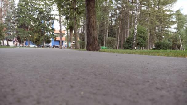 Mladý pohledný muž jezdící na veteránském kole venku. Sportovec na kole v parku. Zdravý aktivní životní styl. Zavřít Zpomalený pohyb