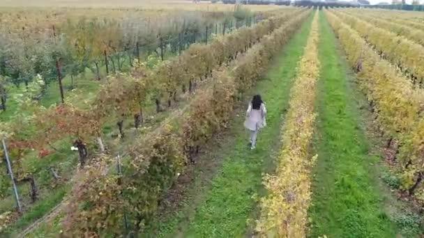 letecký pohled, video běžící brunetky ženy na vinici