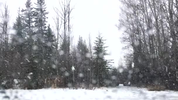 Sněžení v lesoparku