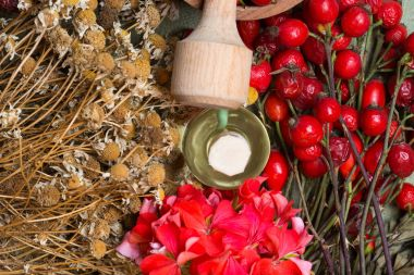 Medicinal plants and herbs composition: Dog rose, bunch branch Rosehips, Different types Rosa canina hips, essential oil. bunch, Tea with rosehip, Tansy, Anise, dried flowers of linden and chamomile