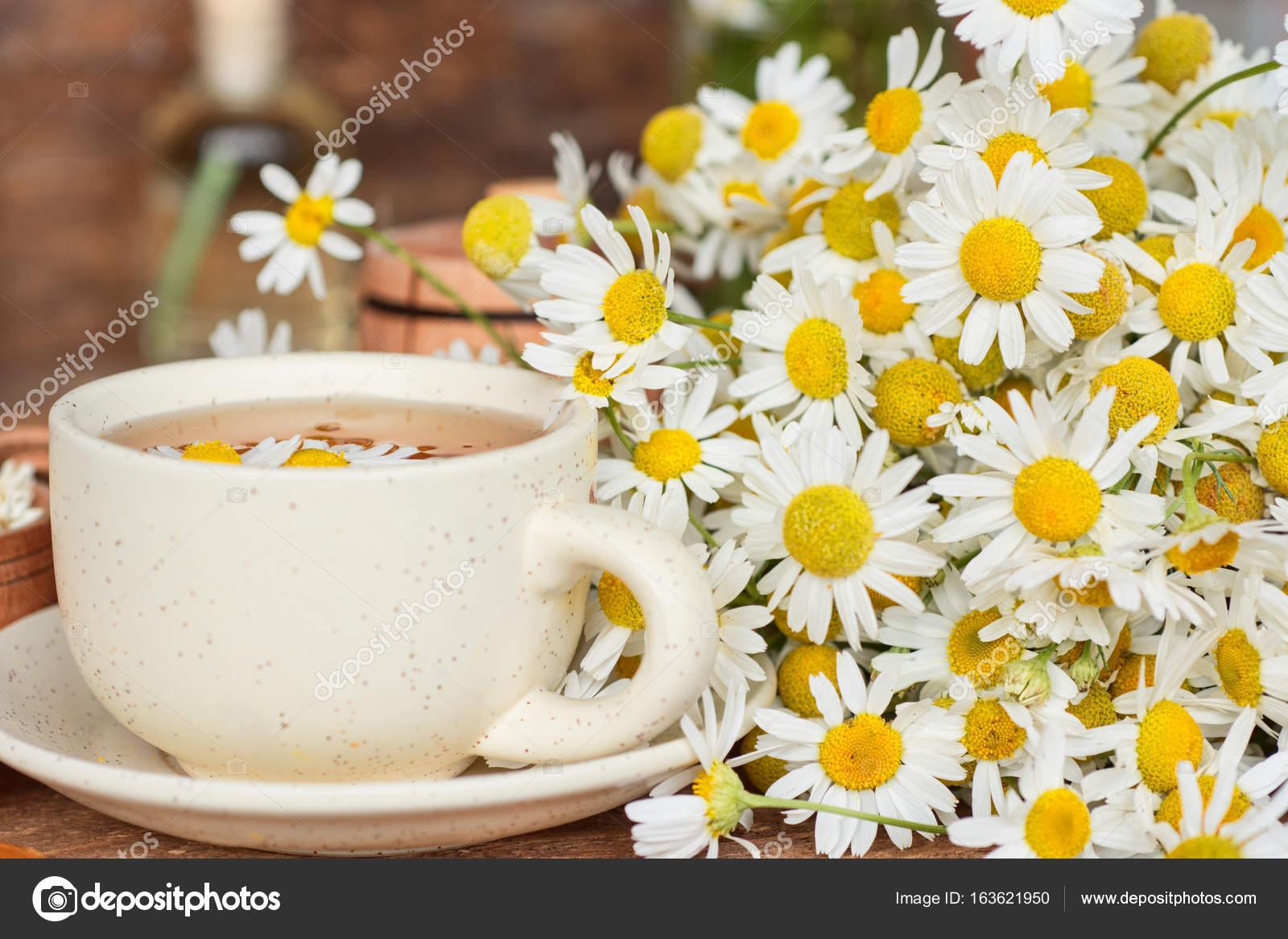 tasse de th la camomille base de plantes avec des fleurs s ches de camomille fleurs de. Black Bedroom Furniture Sets. Home Design Ideas