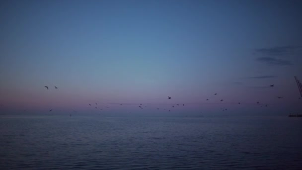 magnificent view of seagulls flying above the sea in slow motion, nature at sunrise time