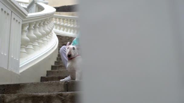 Portrét závažné mužské majitel zvířete v sportovní hladila jeho čistokrevná bulteriér, zatímco sedí na schodiště venkovní zpomalené