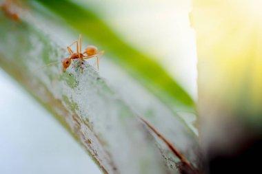 ant wildlife on plant texture