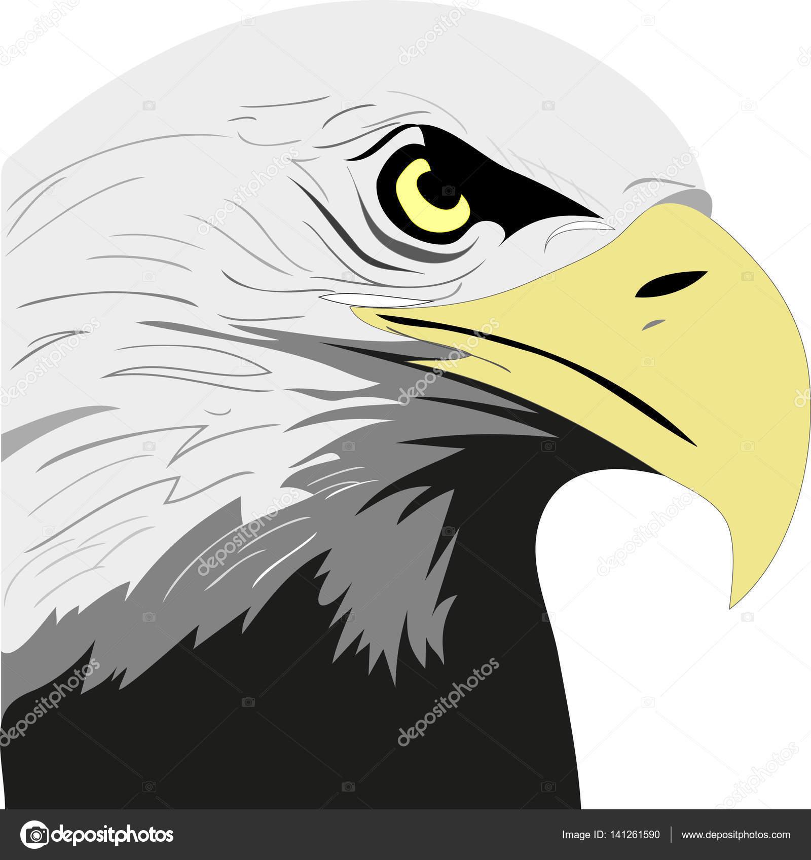 Cabeza de águila de color vectorial — Archivo Imágenes Vectoriales ...