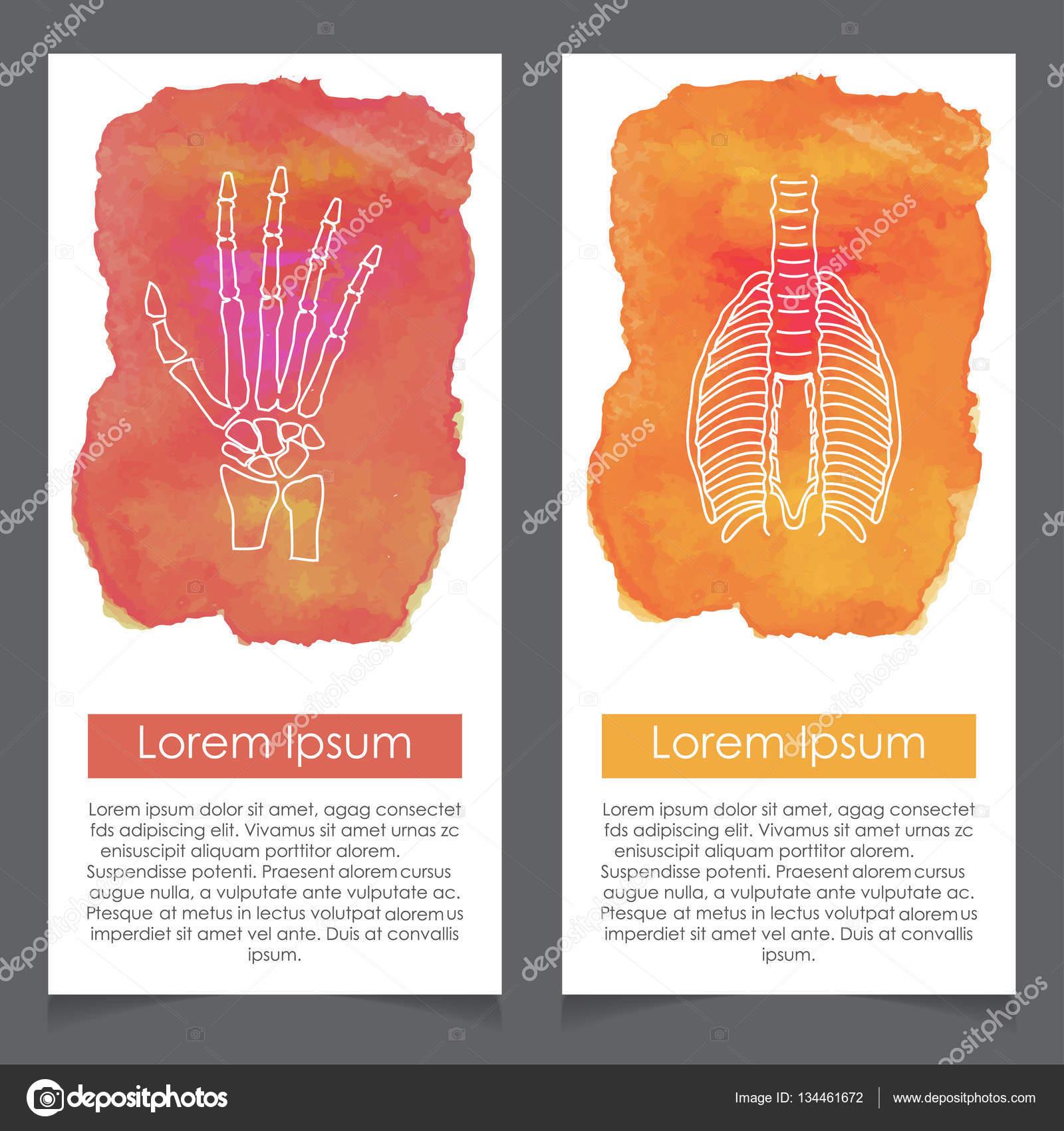 Medical Brochure With Human Body Organs Stock Vector Ibrandify