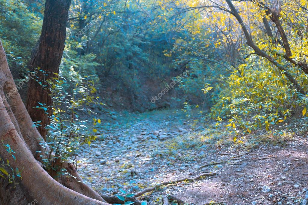 Фотообои Road in magic dark forest