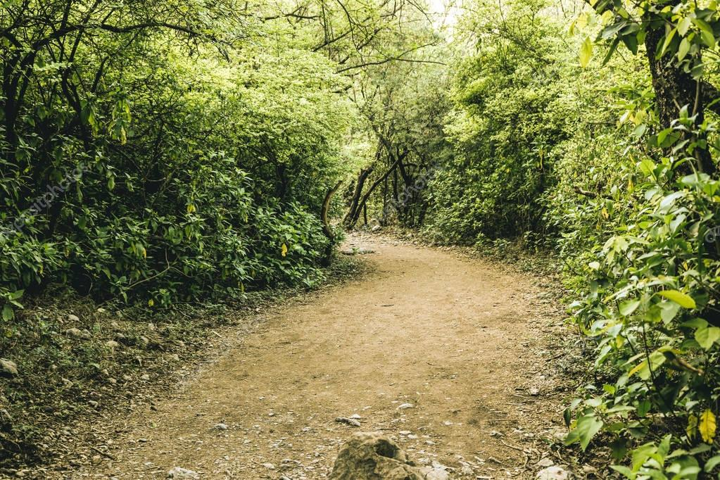 Фотообои Road in dark forest