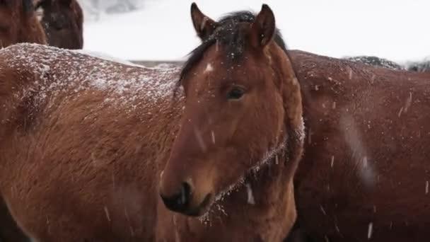 Pferdeherde im kalten Winter auf dem Hof unter Schnee