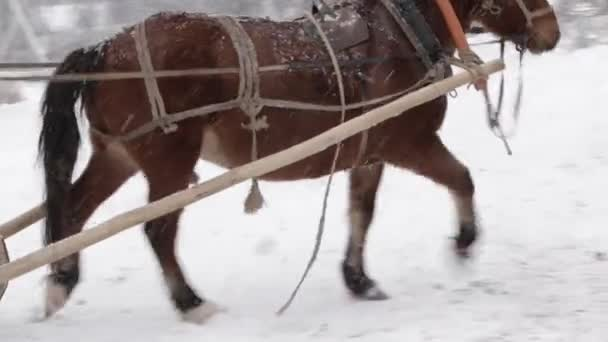 Zimní jízdy na koních na farmě