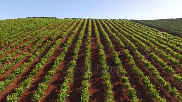 Hroznové plantáže v Jižní Portugalsko, Algarve. v květnu v Portugalsko, Algarve, letecký pohled
