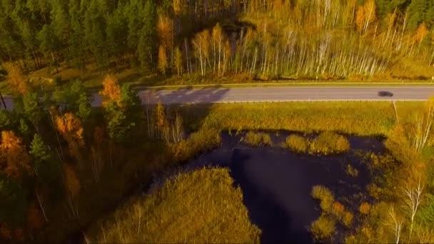přeletěl silnici v podzimním lese