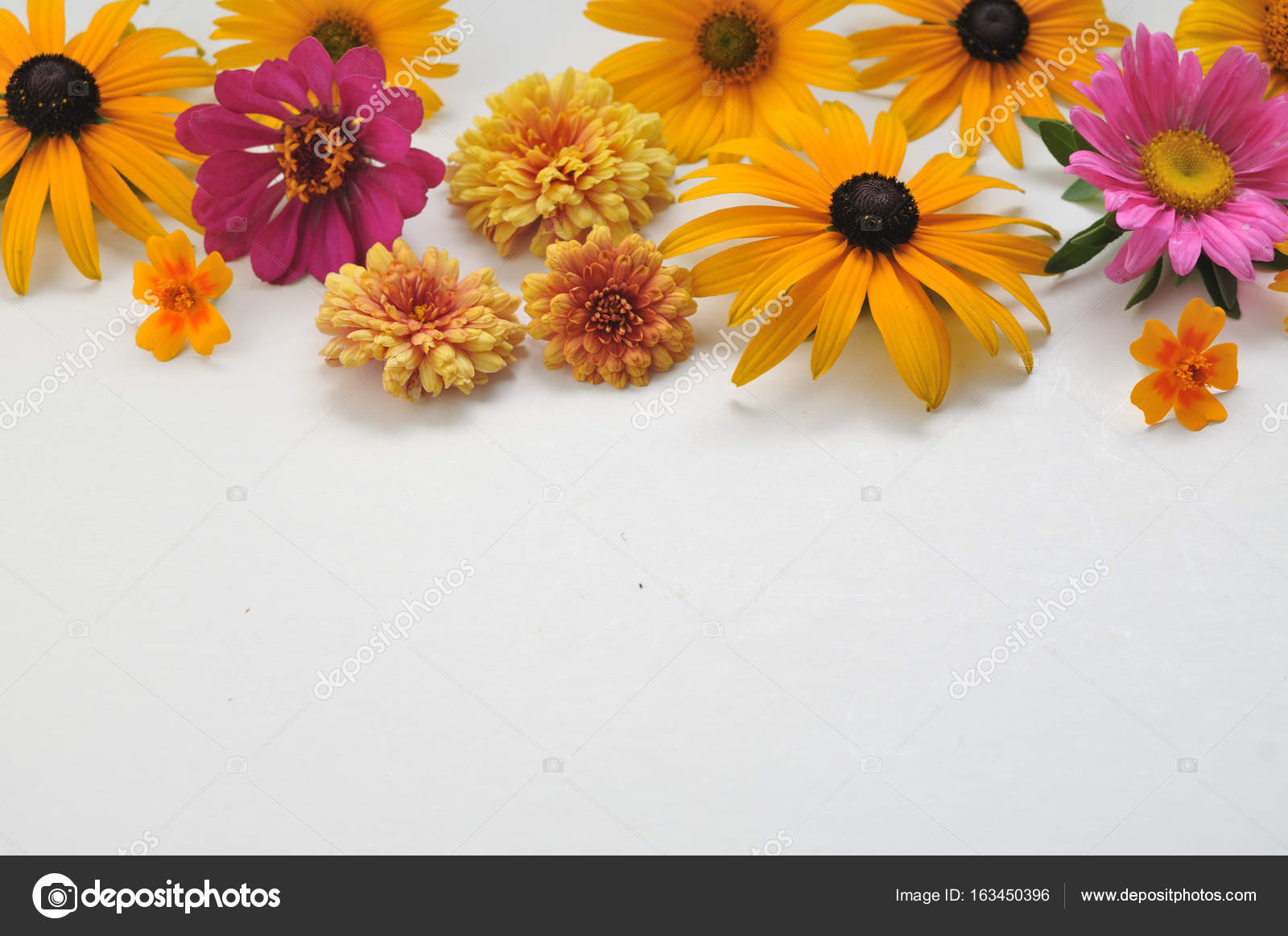 Colored Flowers On A White Background Stock Photo Rvladimirt