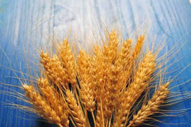 Ripe wheat bran on the table