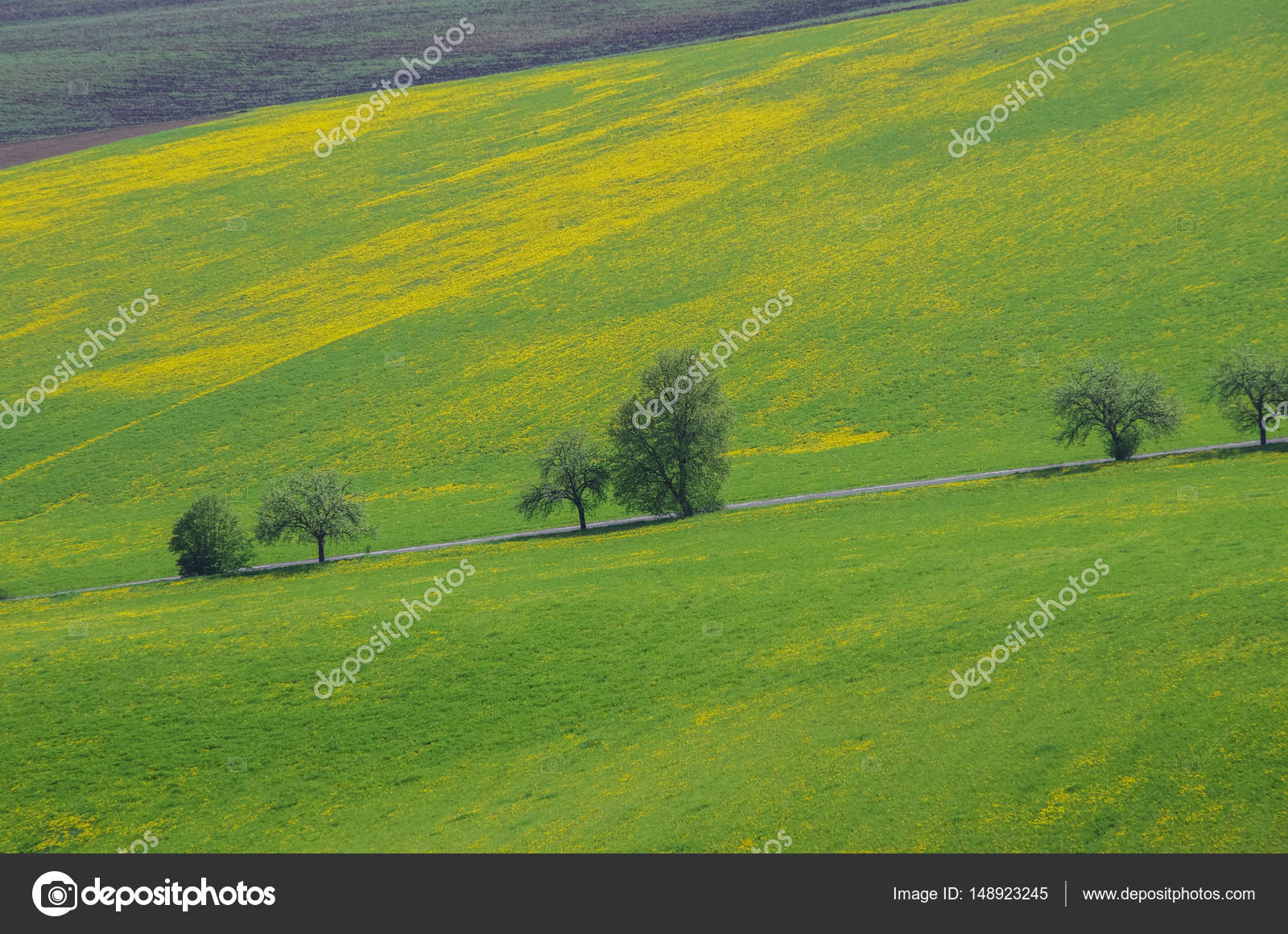 Empty asphalt countryside road through meadow with yellow
