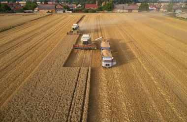 Aerial view of combine harvesters gathers the wheat at sunset, p