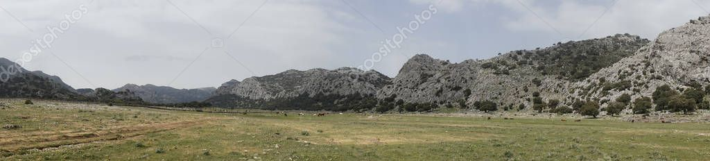 Panoramic view of Los Llanos de Libar in the Natural Park of Grazalema, Andalusia