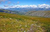 Bello paesaggio di estate, Mountain creek, Russia, Siberia, montagne di Altai, altopiano di cavallo
