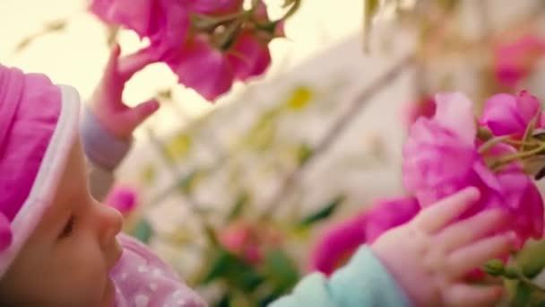 Malá dívka se dotýká ruce pupeny a větví na kvetoucí divoké růže v zahradě