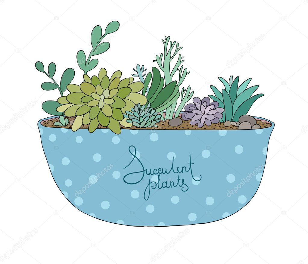 Succulents in pot. Agave, aloe and cactus.