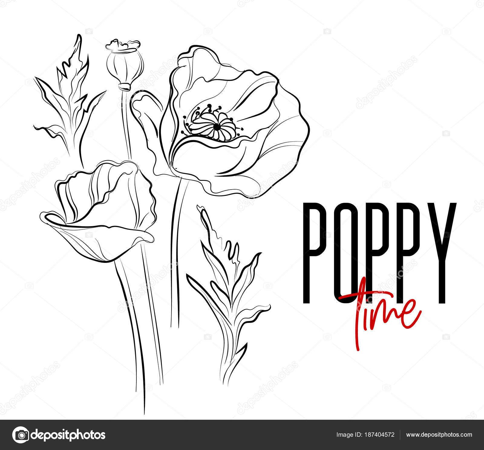Vector poppy flowers decorative print nature flowers black white vector poppy flowers decorative print nature flowers black white illustration poppier bloom summer plants mightylinksfo